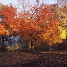 fall-trees-on-the-lake